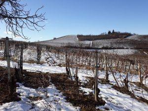 azienda-agricola-bio-nizza-monferrato inverno