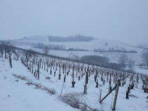 vigneti sotto la neve a nizza monferrato