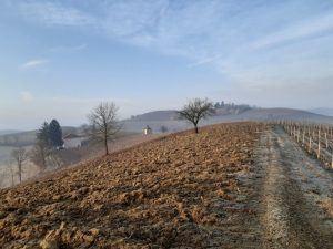 vigneti di nizza monferrato con terra brulla