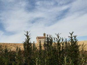 chiesa e piante