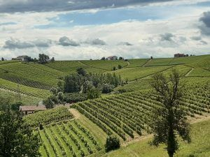 vigneti unesco a nizza monferrato
