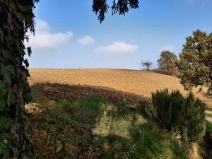 campi azienda agricola, Piemonte